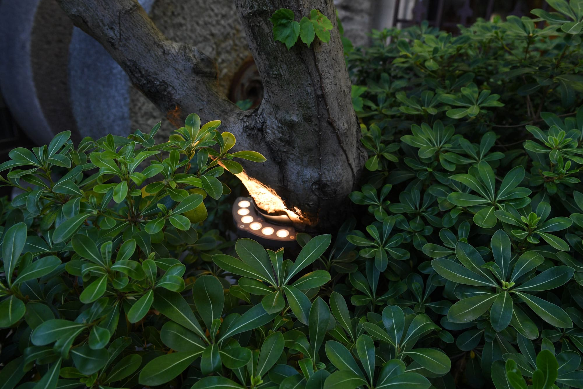 Illuminate your garden